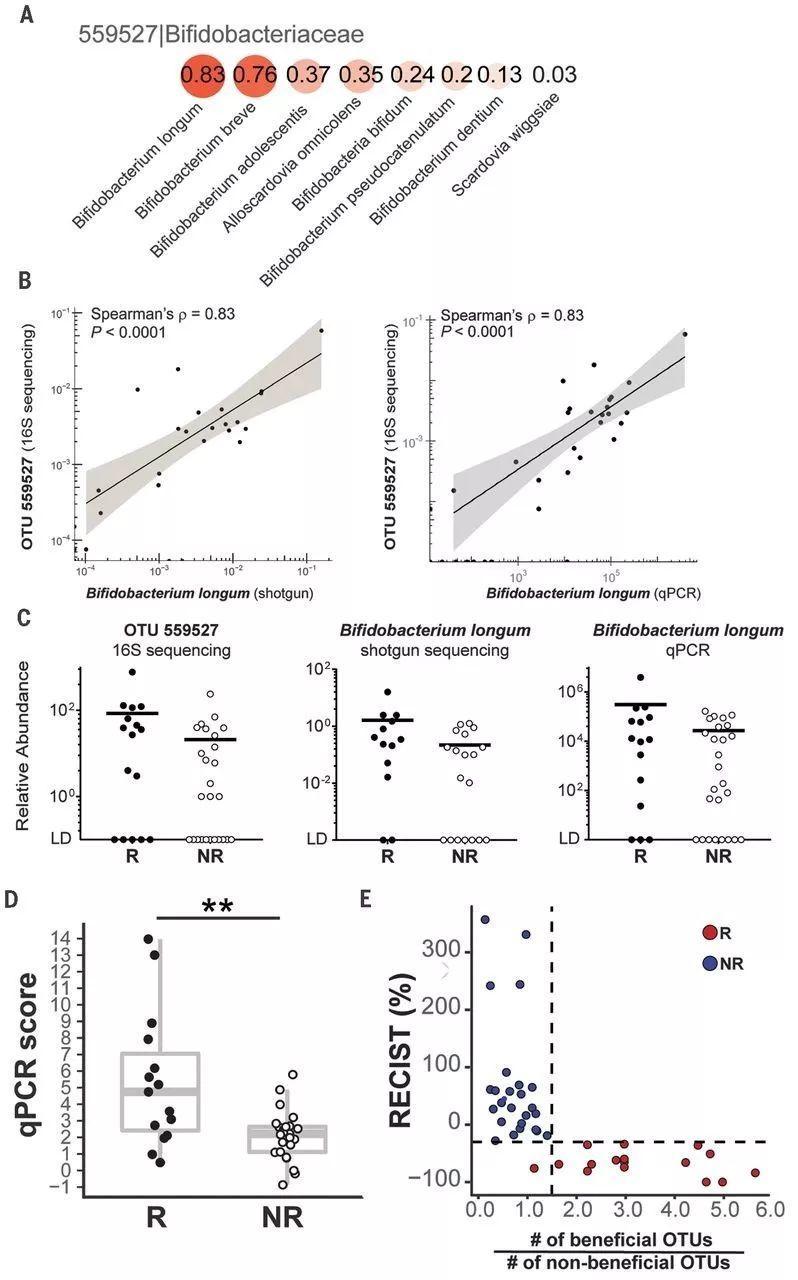 特定肠道菌群可以影响 PD-1抗体的疗效