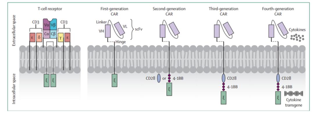 软组织肉瘤的免疫治疗系列(三):软组织肉瘤的新型细胞疗法