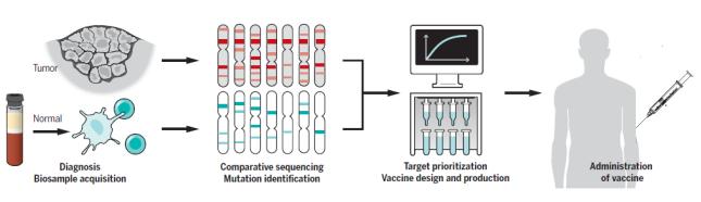 从MUC1疫苗浅谈肿瘤治疗型疫苗发展趋势