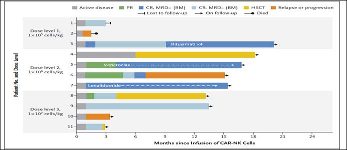 """2020文献快递:CAR-NK""""现货""""细胞免疫疗法在肿瘤治疗方面优势显著"""