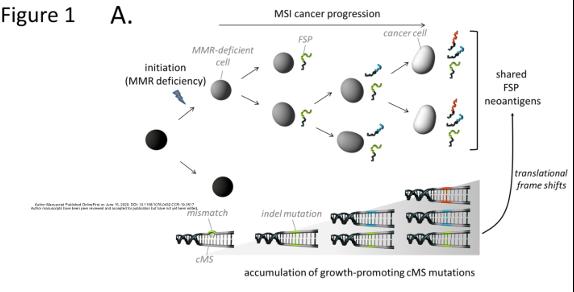 文献快递:基于FSP新抗原肽疫苗—预防和治疗MSI肿瘤